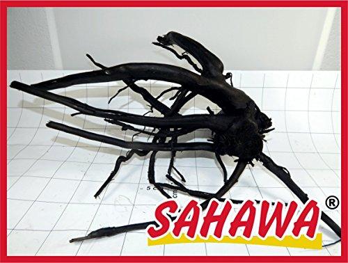 SAHAWA Moorwurzel Größe 4 35-40 cm, Moorkienwurzel,rote Moorwurzel, Moorkienholz, Garnelenbaum