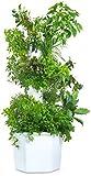 Aerospring 27-Plant Vertical...image