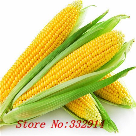 Hot Sale 20 8 sortes de maïs Graines rares maïs sucré frais Heirloom Organic Vegetable Seed Fruit Maïs BLUE GIANT C FRAISE POPCO