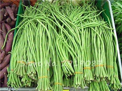 Vente Promotion! 5 Pcs mixte Graines long haricot Très facile d'intérêt Mini Garden Crochet d'or légumes biologiques en santé Graden 15 plantes