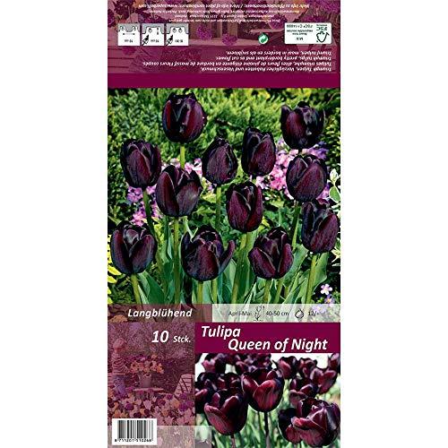 Florado 10x Schwarze Tulpe Blumenzwiebeln 'Queen of the Night', Zwiebelblumen, Garten, Blumen Schnittblumen, Bienen Insekten, Größe 12/+