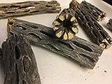 Cholla Cactus Wood (2 Stücke ca. Ø 2cm, 8 und 15cm lang) Vuka Holz Cave Tube Höhle Röhre für Garnelen und andere...