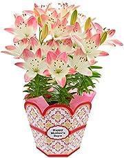 花のギフト社 母の日 シュガーラブ 花鉢 鉢花 百合 鉢植え プレゼント フラワーギフト 5.5号鉢