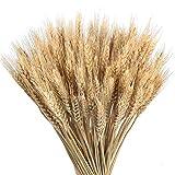 HUAESIN 100pcs Getrocknete Weizen Natürliche Trocken Weizen Deko Weizenstrauß Weizen Getrocknete Blumen für Hochzeit Mittelstücke Zuhause Balkon Party Tisch Vase Deko 40cm