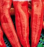 semi di peperone corno di toro rosso - verdure - capsicum annuum - 150 sementi approssimativamente - i migliori semi di piante - fiori - frutti rare - peperoni rossi - idea regalo originale