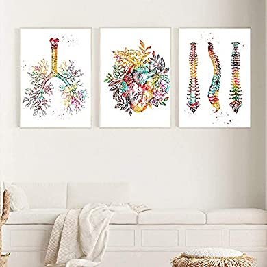 Foto di VVSUN Anatomia Umana Muscoli Sistema Arte della Parete Pittura su Tela Poster e Stampe Mappa del Corpo Immagini murali Educazione Medica Home Decor, 50x70cmx3Pcs (Senza Cornice)