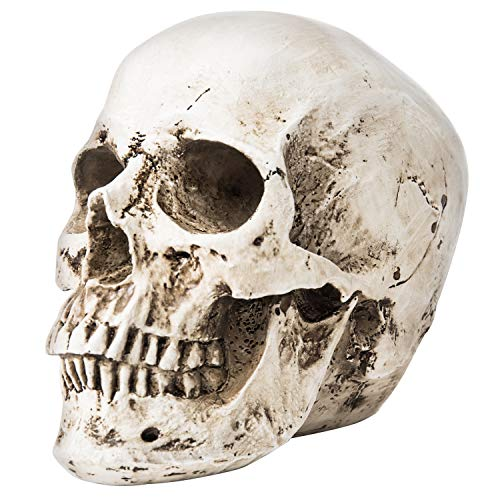 MyGift 9-Inch Decorative Realistic Human Skull Model Statue