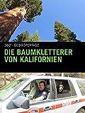 En Californie, la mission des grimpeurs d'arbres...