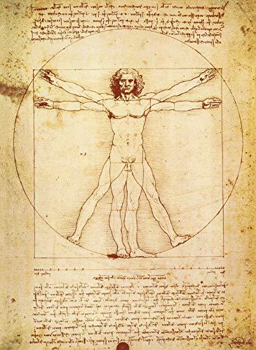 PalaceLearning Vitruvian Man von Leonardo Da Vinci Poster – Proportionen der menschlichen Figur Zeichnung – Fine Art Print (laminiert, 45,7 x 61 cm)