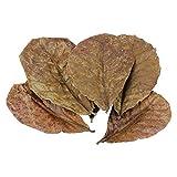 Lot de 50 feuilles d'amande pour aquarium - Décoration d'aquarium - Équilibre des crevettes - pH efficace - Habitat naturel...