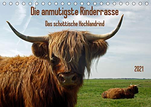 die anmutigste Rinderrasse - Das schottische Hochlandrind (Tischkalender 2021 DIN A5 quer)