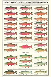 Trout, Salmon and Char Males Fish Poster and Identification Chart