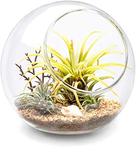 Glass terrarium with pebbles and shells