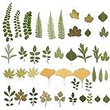 HEALLILY 2 Confezioni Foglie Essiccate Pressate Foglie Secche Naturali Vere Essiccate Pressate per Foglie Pressate Artigianato Artistico
