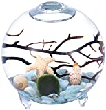 Kit de acuario con pies para acuario globo acuático, terrario, jarrón de cristal con pie, bolas de musgo vivo, concha de mar y ventilador negro coral utilizado para decoración(2.4''x 2.55'',estilo E)
