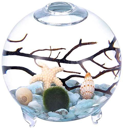 Aquarium-Set mit Fuß, Kugelform, Terrarium, Glasvase mit Füßen, lebende Mooskugeln, Kieselsteinen und schwarzem Fächer, Koralle, als Tischdekoration, Geschenk für Freunde (8,9 x 10,2 cm, Stil E)