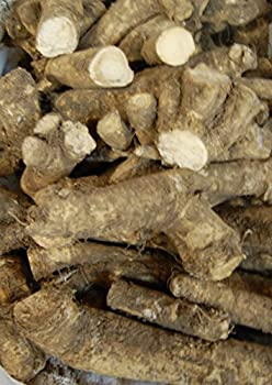 Horseradish Roots 1 pound  Ready For Planting or Preparing As Sauces or Dressings etc JACOBS LADDER