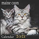 maine coon: 2021 Wall & Office Calendar, 12 Month Calendar