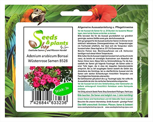 Stk - 3x Adenium Arabicum Bonsai Rosa Del Desierto Jardín Plantas - Semillas B528 - Seeds Plants Shop Samenbank Pfullingen Patrik Ipsa