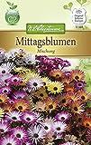 N.l. chrestensen 5188 Flores Semillas