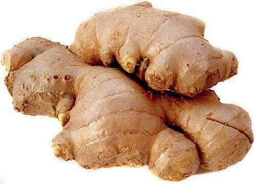 Tiyuki Fresh Same day shipping Ginger Root 8 5 popular Ounces for and Cooking Flavor E Great
