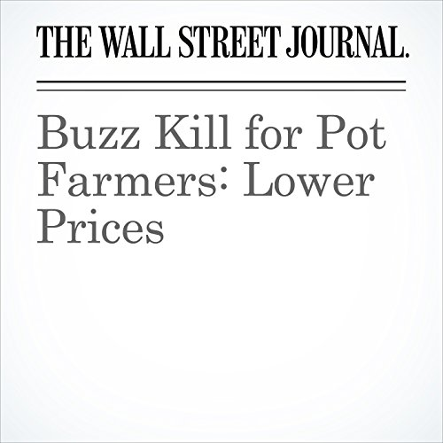 Buzz Kill for Pot Farmers: Lower Prices copertina