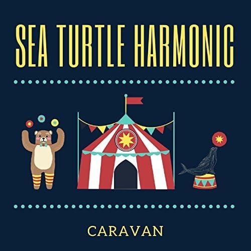 Sea Turtle Harmonic