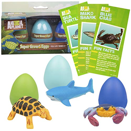 SCS Direct Animal Planet Ocean Sea Creature Eggs 3 Pack - Toys Hatch and Grow to 3X Size in Water - Includes Turtle, Shark, & Crab w Educational Fact Cards