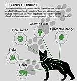IMG-2 collare antipulci per cani prevenzione