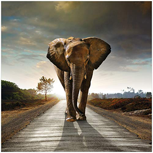 Wallario Acrylglasbild Elefant bei Sonnenaufgang in Afrika - 50 x 50 cm in Premium-Qualität: Brillante Farben, freischwebende Optik