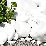 MGS SHOP Marmorkies Snow rein weiß schneeweisser Garten Kies 25 kg (40/80 mm) - 4