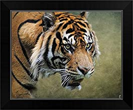 On The Prowl Bengal Tiger Black Framed Art Print, 17