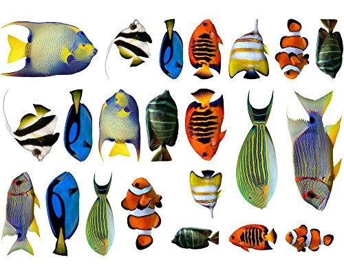 Samunshi Wandtattoo Kinderzimmer Fische Aufkleber Set - Wc Sticker für Schlafzimmer oder als Fliesensticker Badezimmer für Jungs und Mädchen Unterwasserwelt Dekoration Badezimmer Fliesen