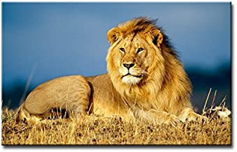 Alva443Anne Wall Art Painting African Lion King In Grass Pictures Print On Canvas Giclee Wooden Framed 12X16 Inch