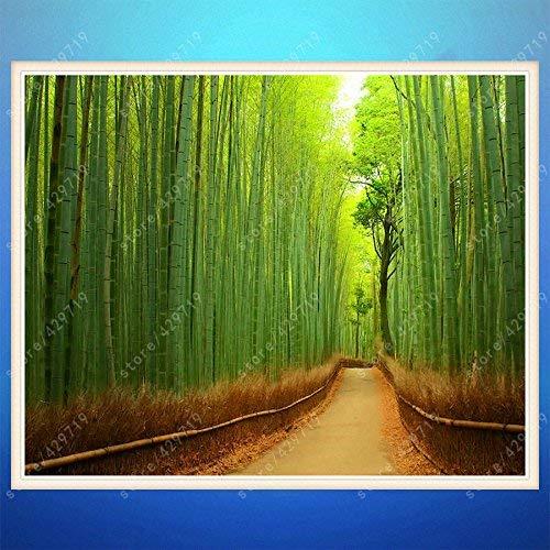 20 / sac bambou Moso fress énormes pubescens géant Phyllostachys Moso Bambusa hardy professionnelles graines de plantes Conditionnement maison de jardin