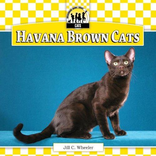 Havana Brown Cats (Cats Set 6)