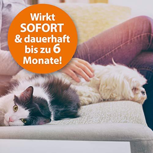 ARDAP Fogger 2 x 100ml - Effektiver Vernebler zur Ungeziefer- & Flohbekämpfung für Haushalt & Tierumgebung - für Räume bis 30m² - Wirksamer Schutz für bis zu 6 Monate - 5