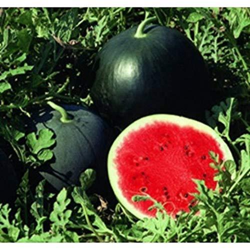 Soteer Garten - 10 Stück Wassermelone 'Red Star' F1 Samen zuckersüss Melonen Samen Essbar Früchte und Obst Saatgut für Garten Balkon/Terrasse