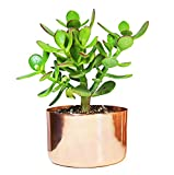 4' Copper Succulent Planter - Perfect for All Plants - by Alchemade