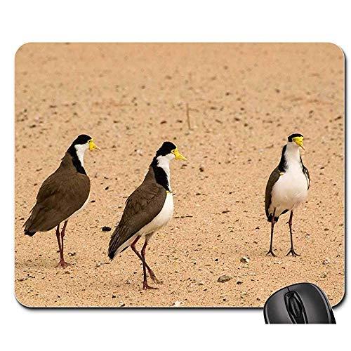 Muis Pad Spur-Gevleugelde Plover Vogels Maroubra Sydney Australië Mouse Pad Muis Mat Gaming Mat Mousepad Mouse Pads 25X30cm