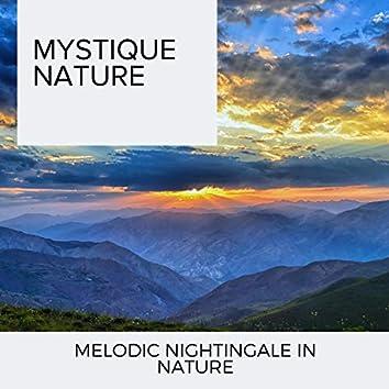 Mystique Nature - Melodic Nightingale in Nature