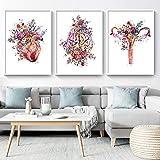 PGMZQHGF Decoración Moderna Lienzo Pintura Anatomía Arte Médico Floral Corazón Pulmón Impresión de póster Educación para Estudiantes Imágenes del Hospital   40x60cmx3 Sin Marco