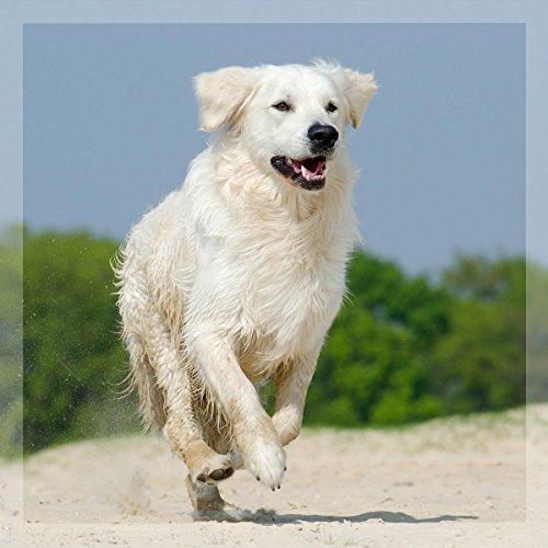 GreenPet 100% natürliches Wurm Pet-Liquid Tropfen Flüssig 50ml - Hunde, Katzen, Geflügel, Vögel, Kaninchen und Haustiere, Vor und bei Wurmbefall - 4