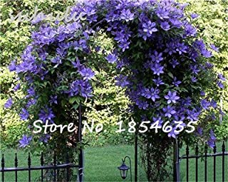 Hot Sale 100Pcs Rare Climbing Jasmine Flower Seeds,Potted Bonsai Garden Flowers Seeds Indoor or Outdoor Plant Easy to Grow