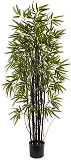Best black bamboo tree Reviews