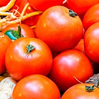 10 Ultra Sweet Tomato Vegetable Seeds