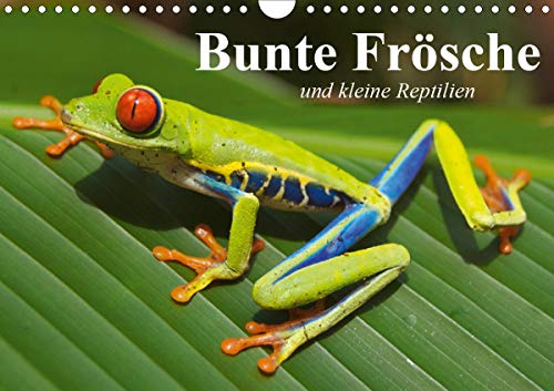 Bunte Frösche und kleine Reptilien (Wandkalender 2021 DIN A4 quer)