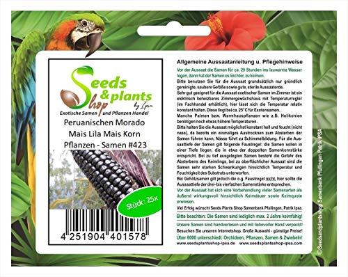 Stk - 25x Peruanischen Morado Mais Lila Mais Korn Pflanzen - Samen #423 - Seeds Plants Shop Samenbank Pfullingen Patrik Ipsa