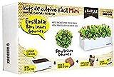 Huerto Urbano - Seed Box Mini Ensaladas - Batlle