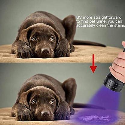 2 Pack UV Flashlight Black Light, Escolite 51 LED 395nm Ultraviolet Blacklight Detector for Dry Pet Urine and Bed Bug 7